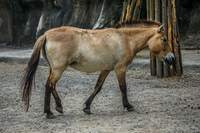 African Horse Wenshan District,  Taipei City,  Taiwan, Asia