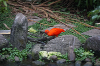 Birds of Taipei Zoo Wenshan District,  Taipei City,  Taiwan, Asia