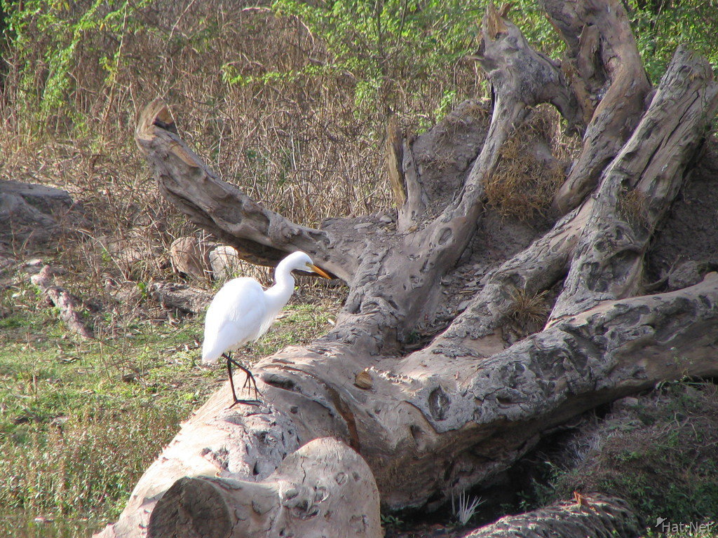egret near hunting palace of bundi