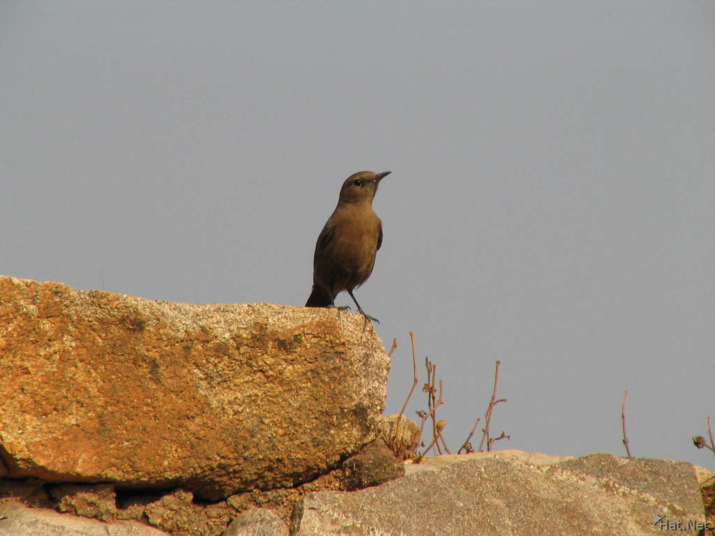 bird in jhansi
