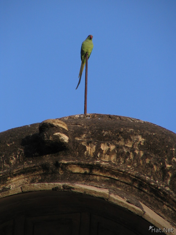 parakeet in bundi palace