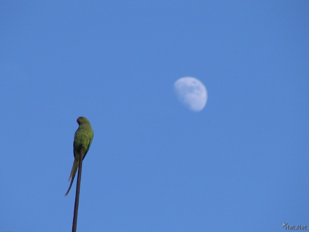 parakeet and the moon in bundi palace