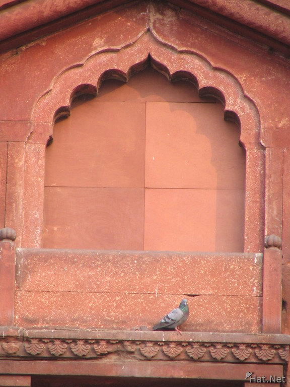 pigeon above the gate in red fort