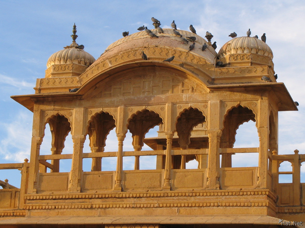 pigeons on haveli roof