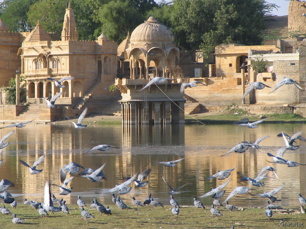 flock of pigeons at gadi sagar