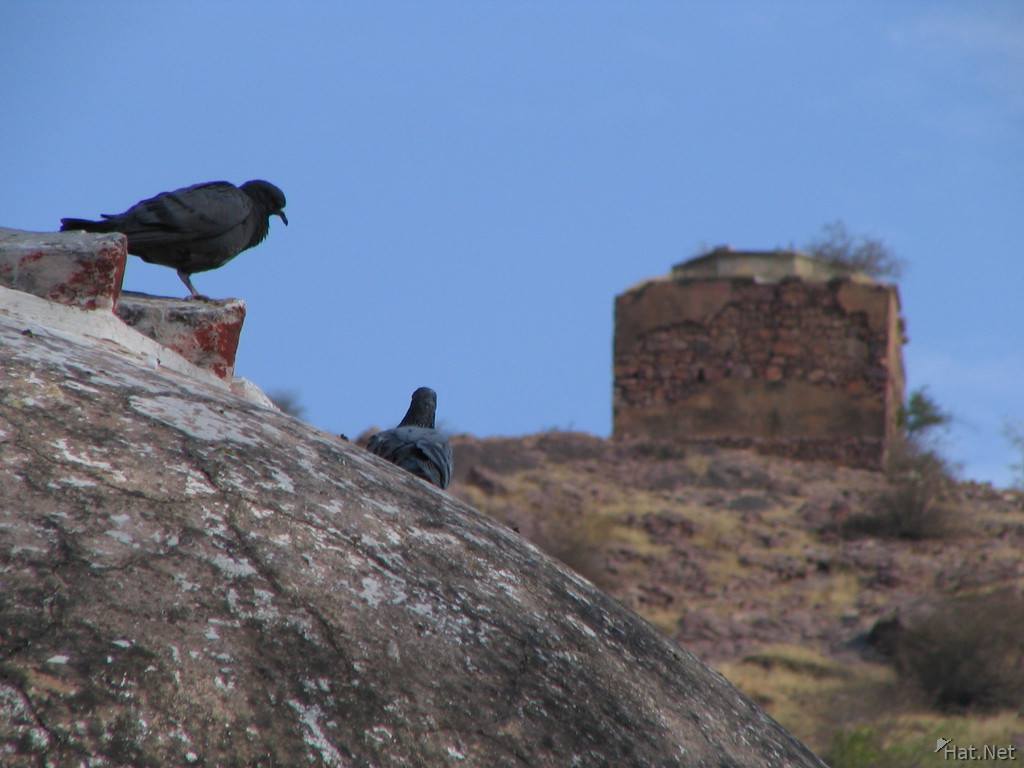 pigeons at bundi star fort