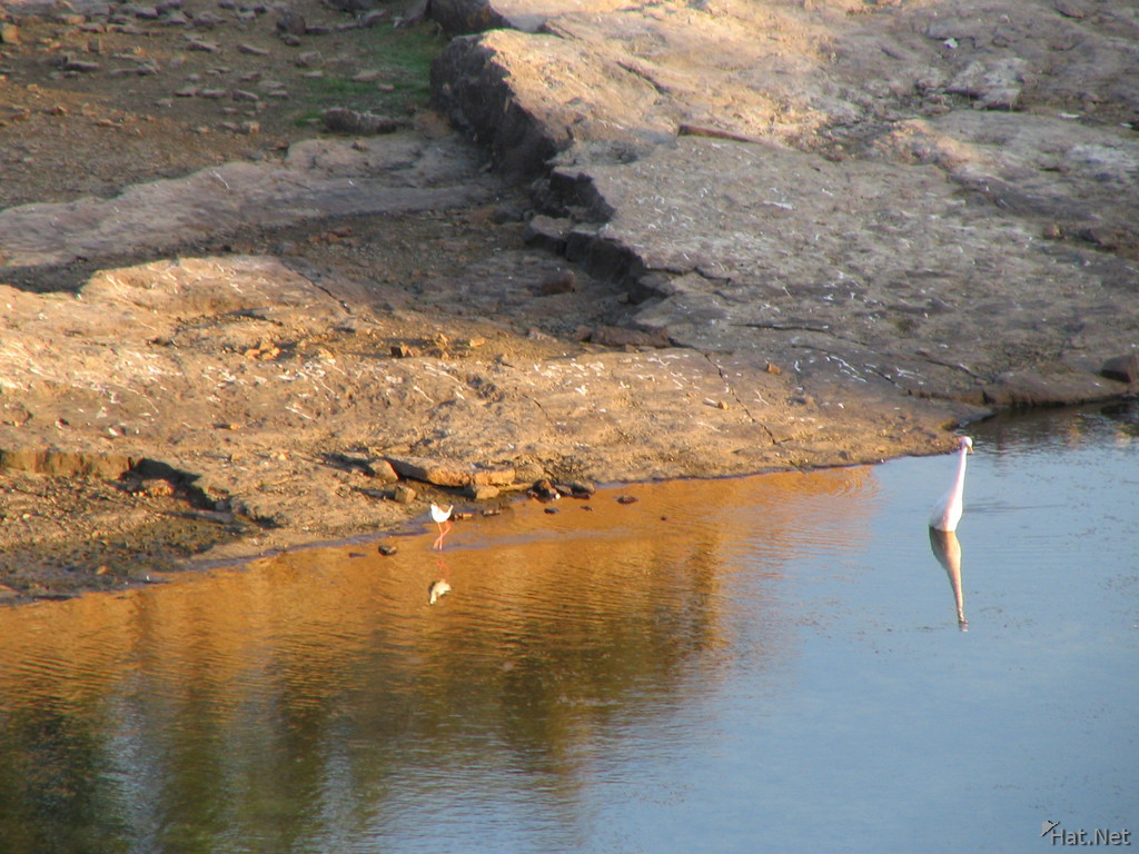 egret at lake of padmini palace