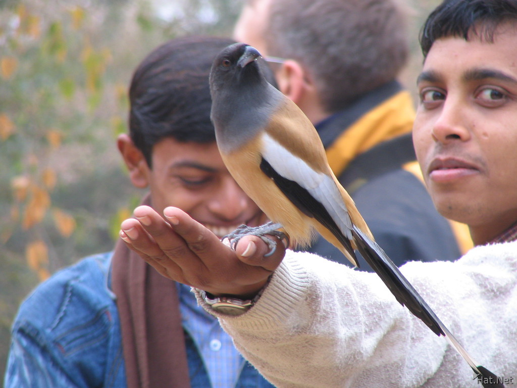 indian treepie and indian student
