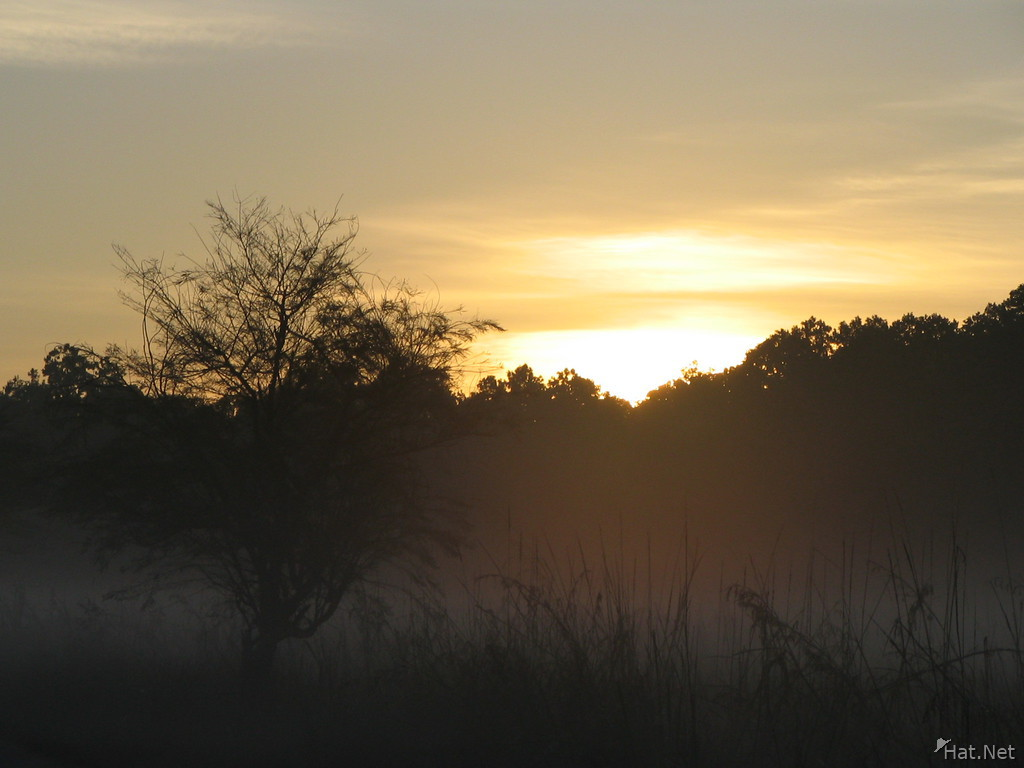 corbett jungle sunrise