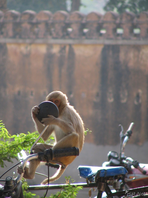 monkey in hunting palace looking into a mirror