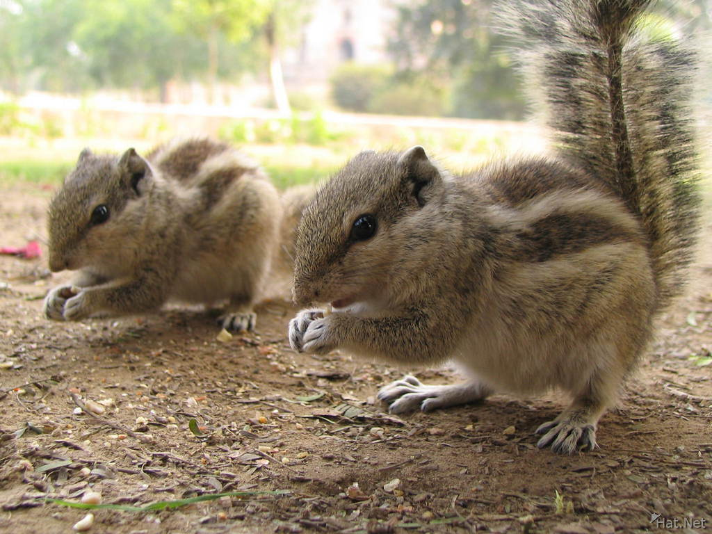 squirrels in lodi garden