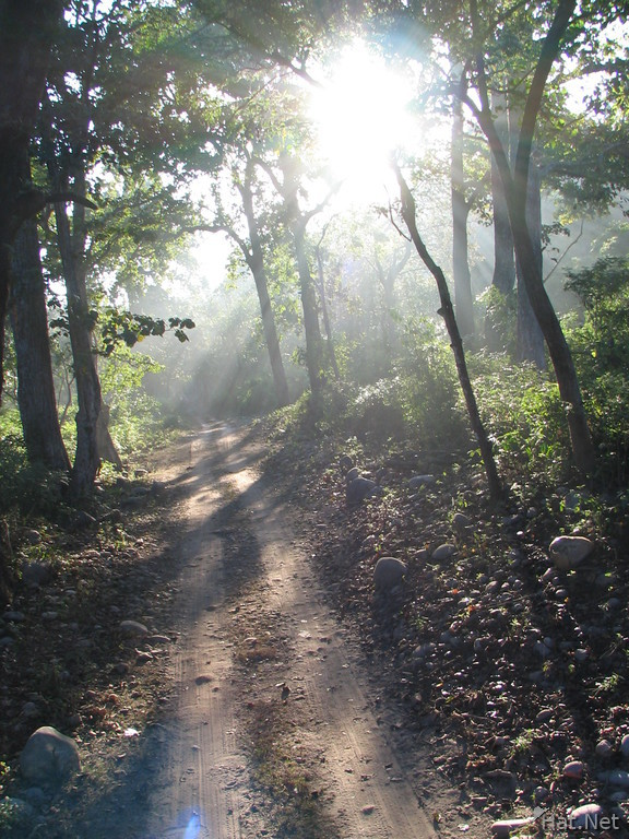 jungle road at the morning