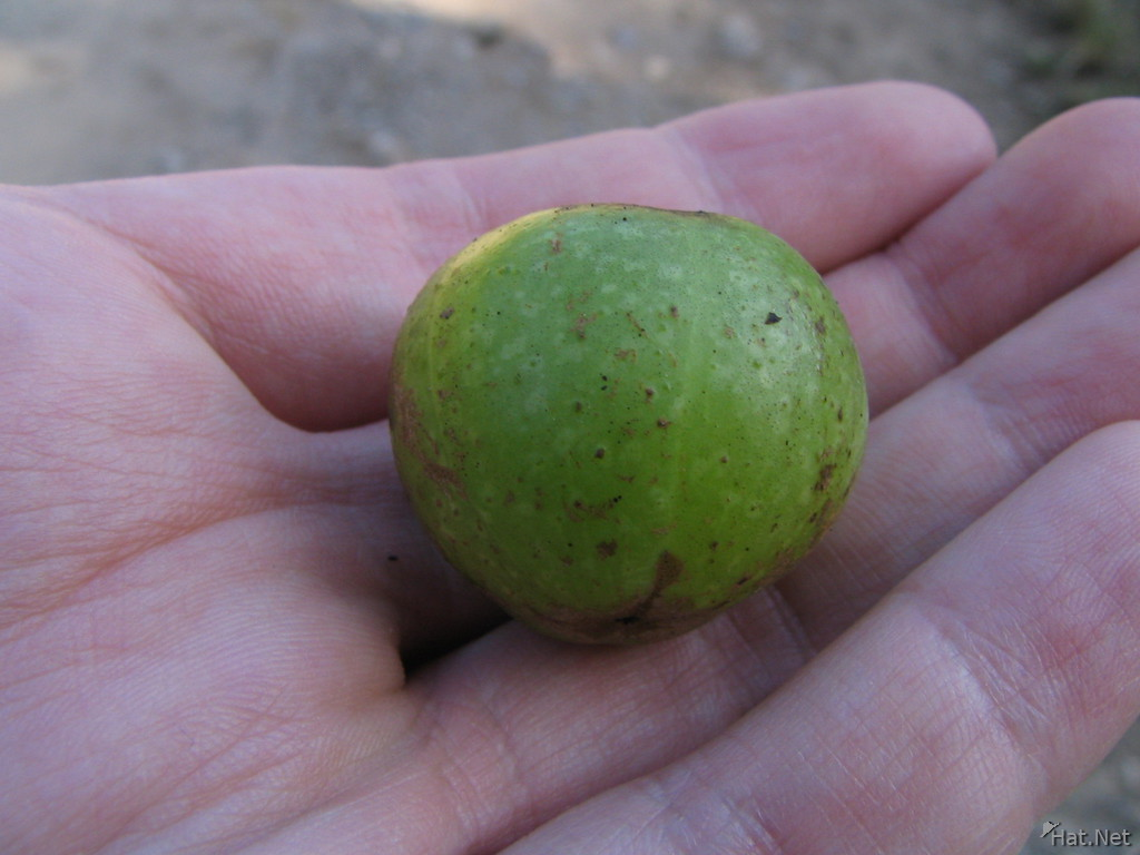 green fruit