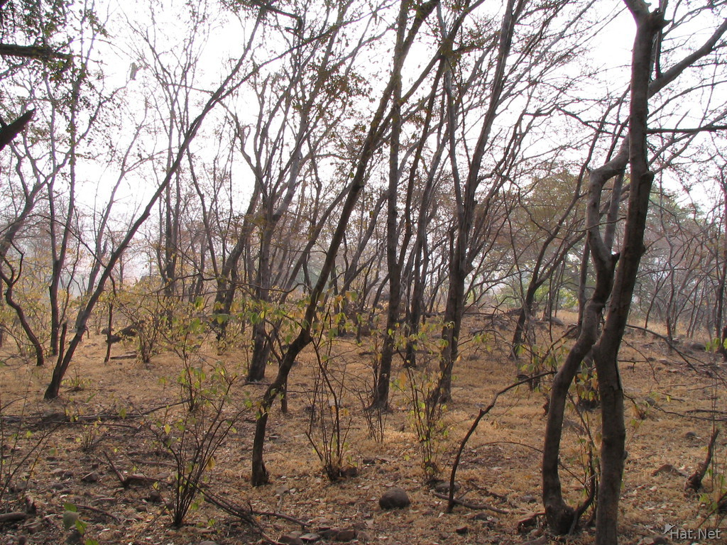 jungle of ranthambhore