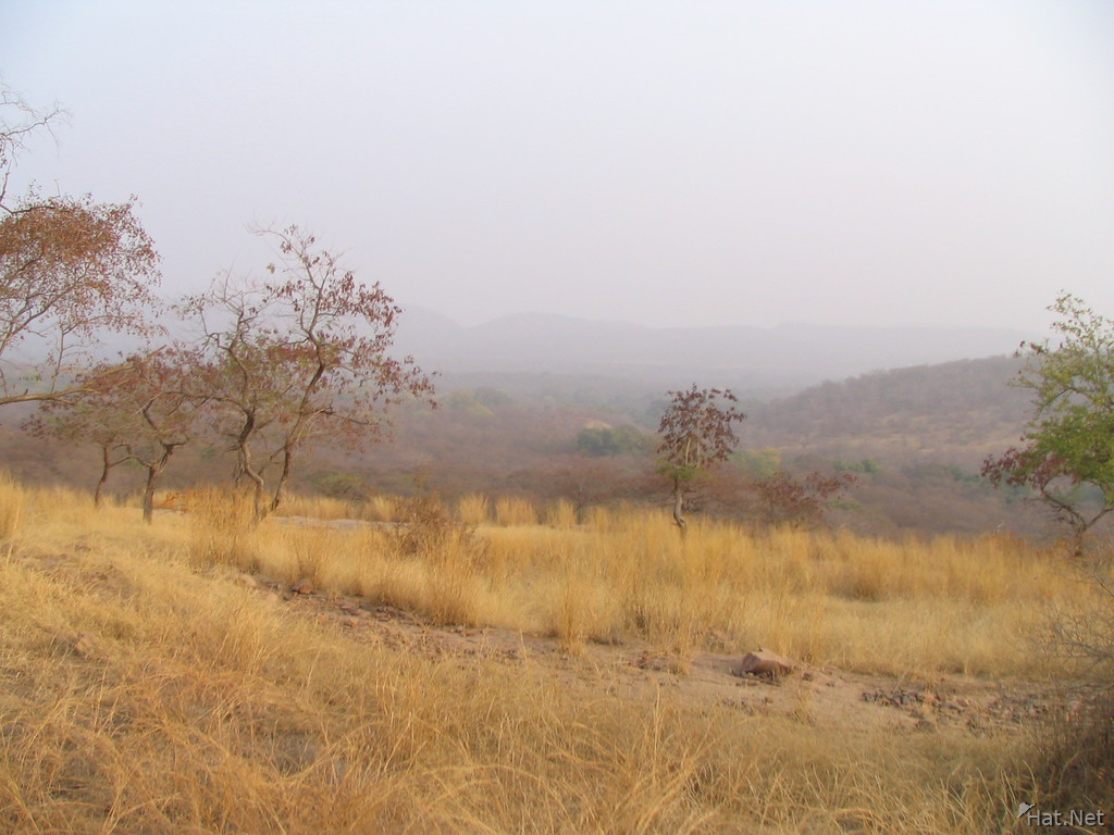 ranthambhore jungle
