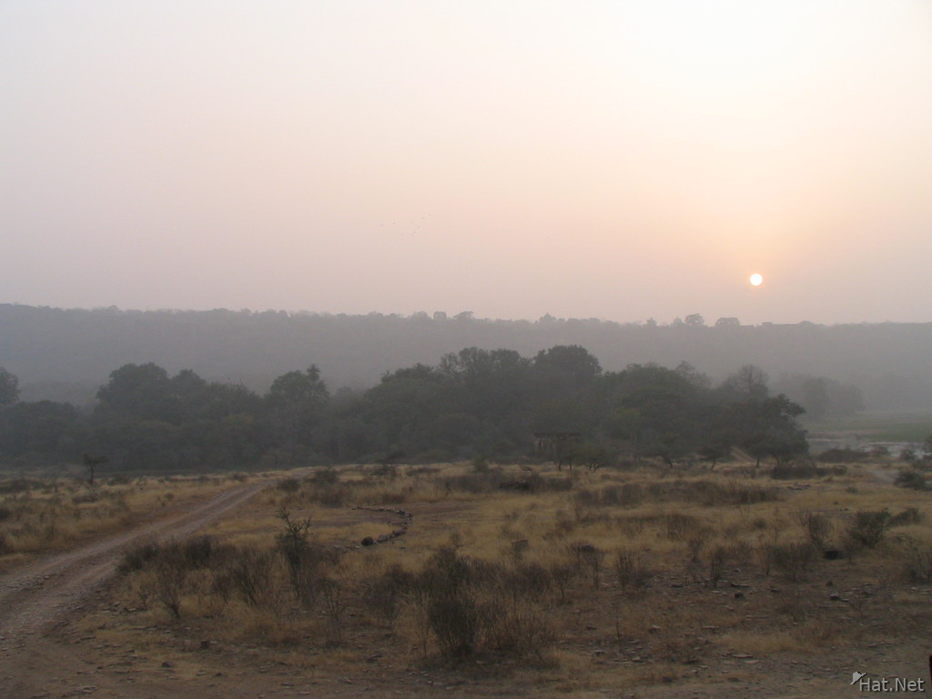 sunset at ranthambhore