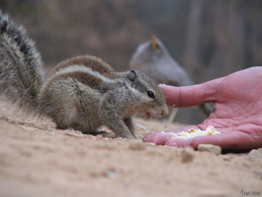 squirrel and food at ranthambhore