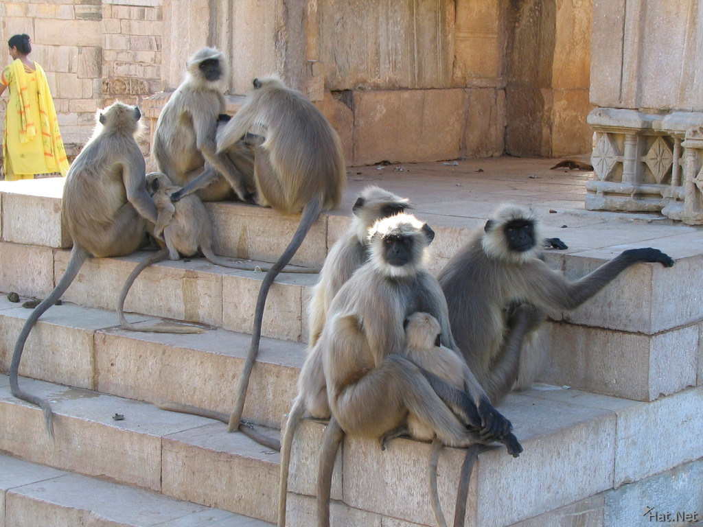 monkeys near chitto