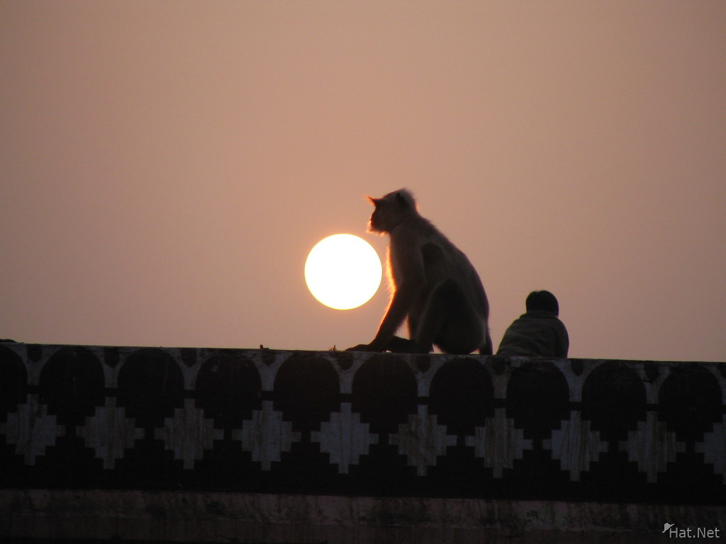 monkey sunset at rathamhbore