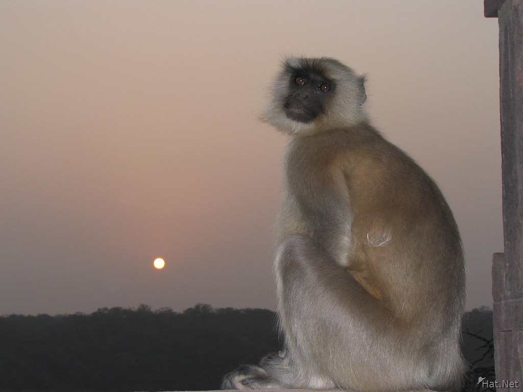 crying monkey at rathamhbore
