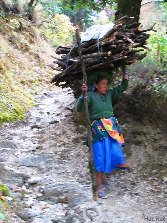 firewood lady in nainital