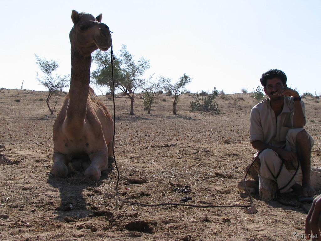 camel and seller