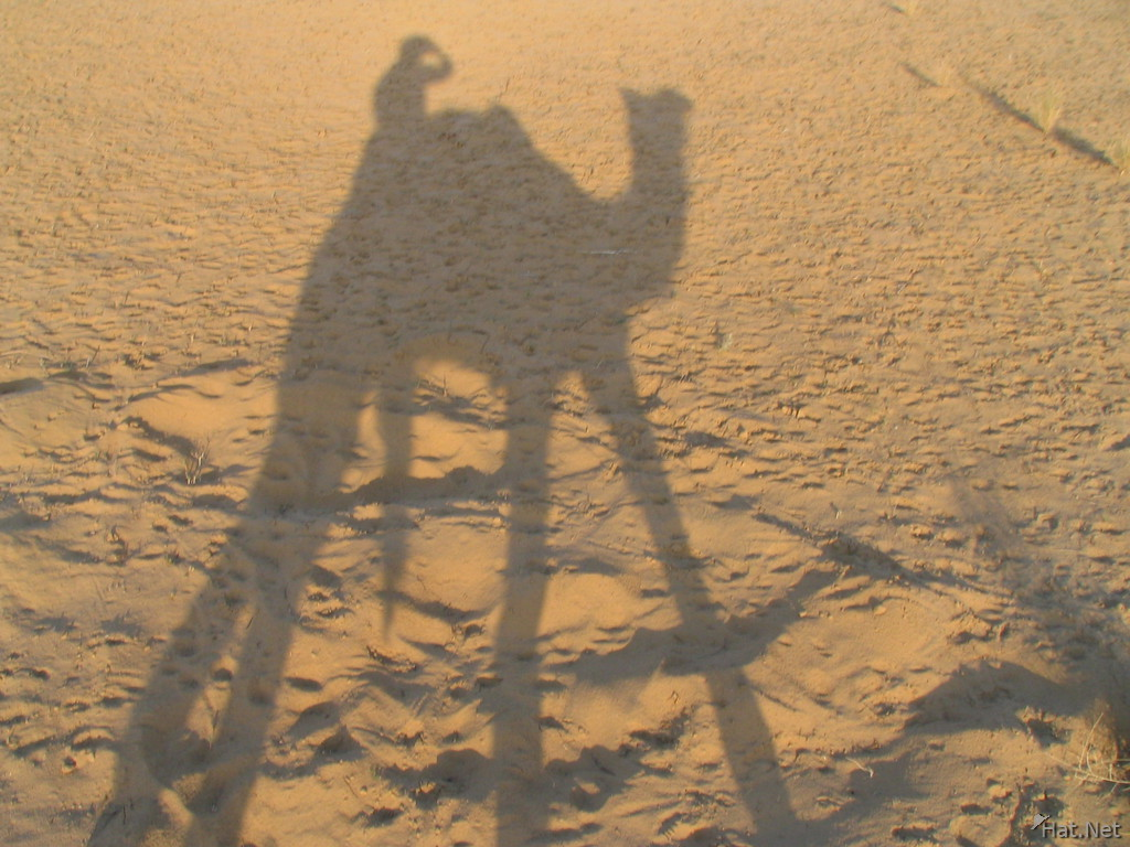 shadow of the camel