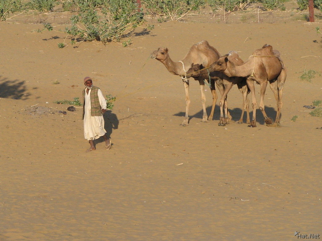 osman and the three camels