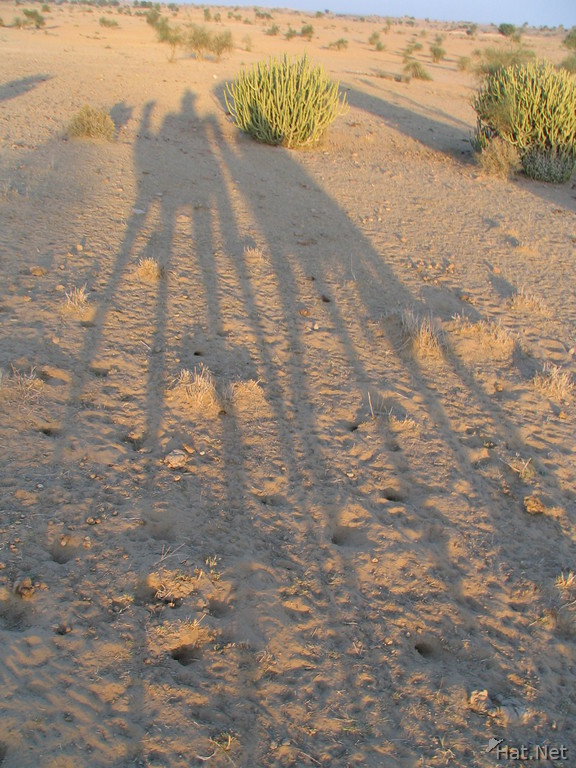 shadow of the camels