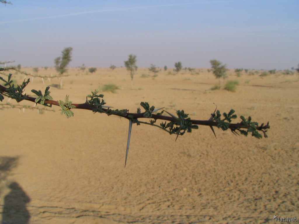spiked plants in desert