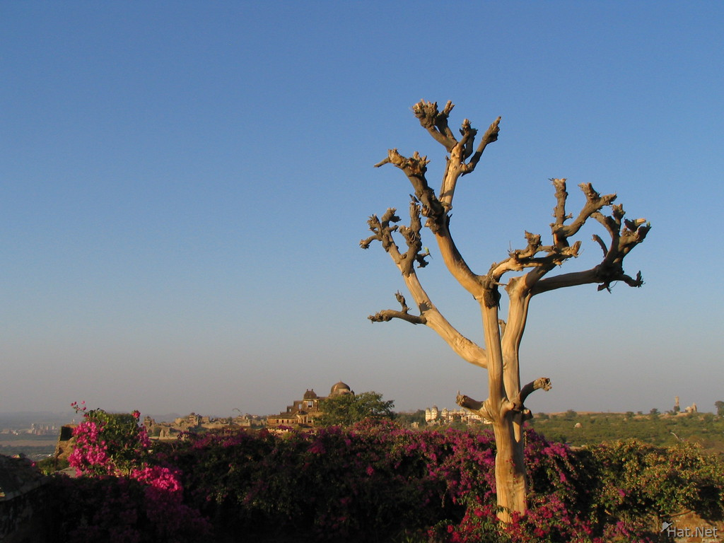 old tree before chittorgarh