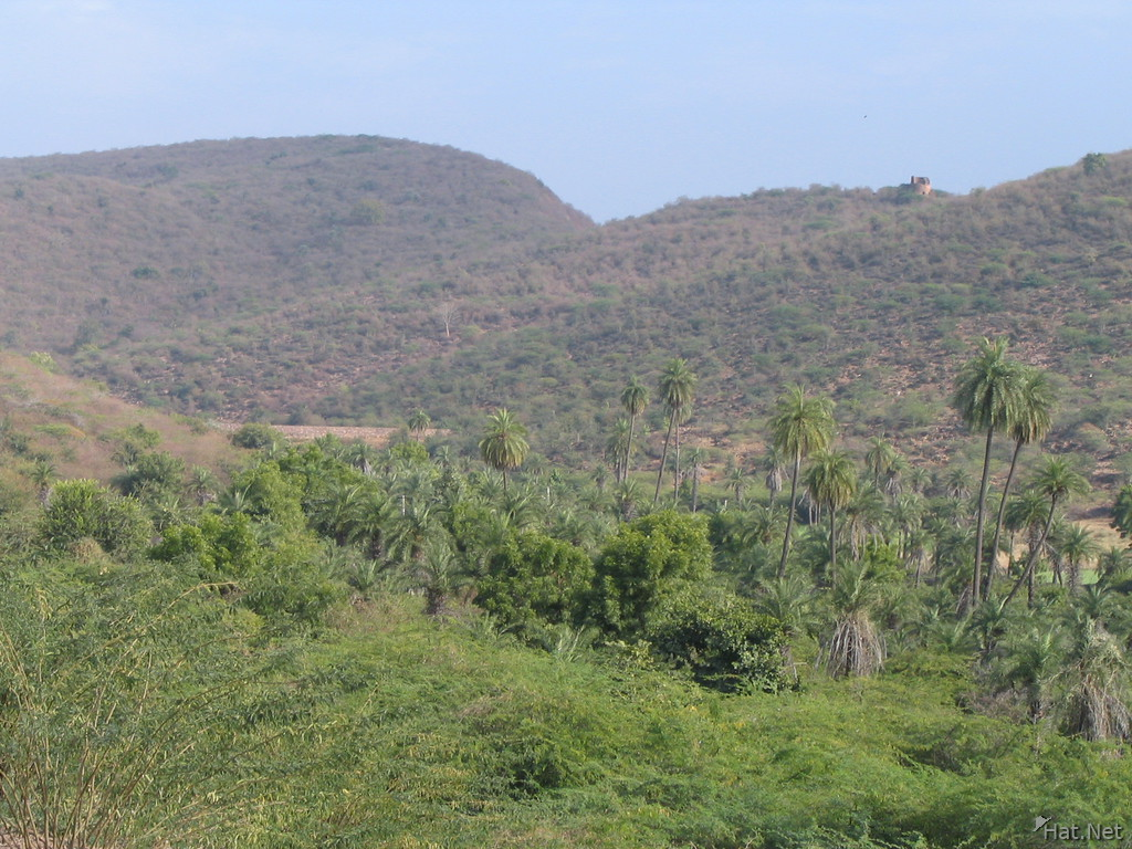 jungles around bundi