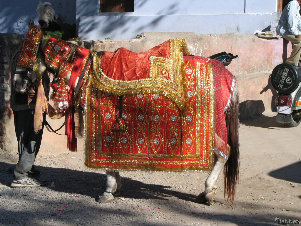 http://www.hat.net/album/asia/india/10_temples_and_gods/08_haridwar/041205203908_indian_wedding_horse.jpg