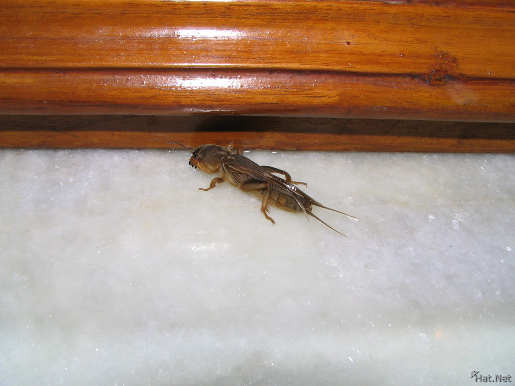 nasty insect in ganpati guesthouse