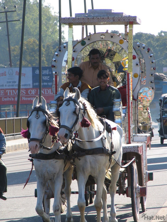 horse cart in haridwar