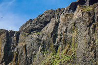 Vikurfjara Black Sand Beach puffin cliff Vík,  South,  Iceland, Europe