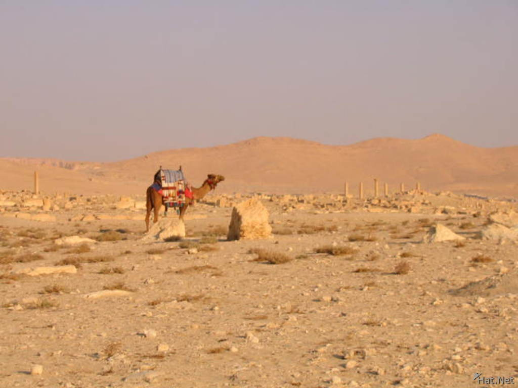 camel and the ruin s