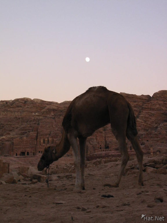 moonrise over camel