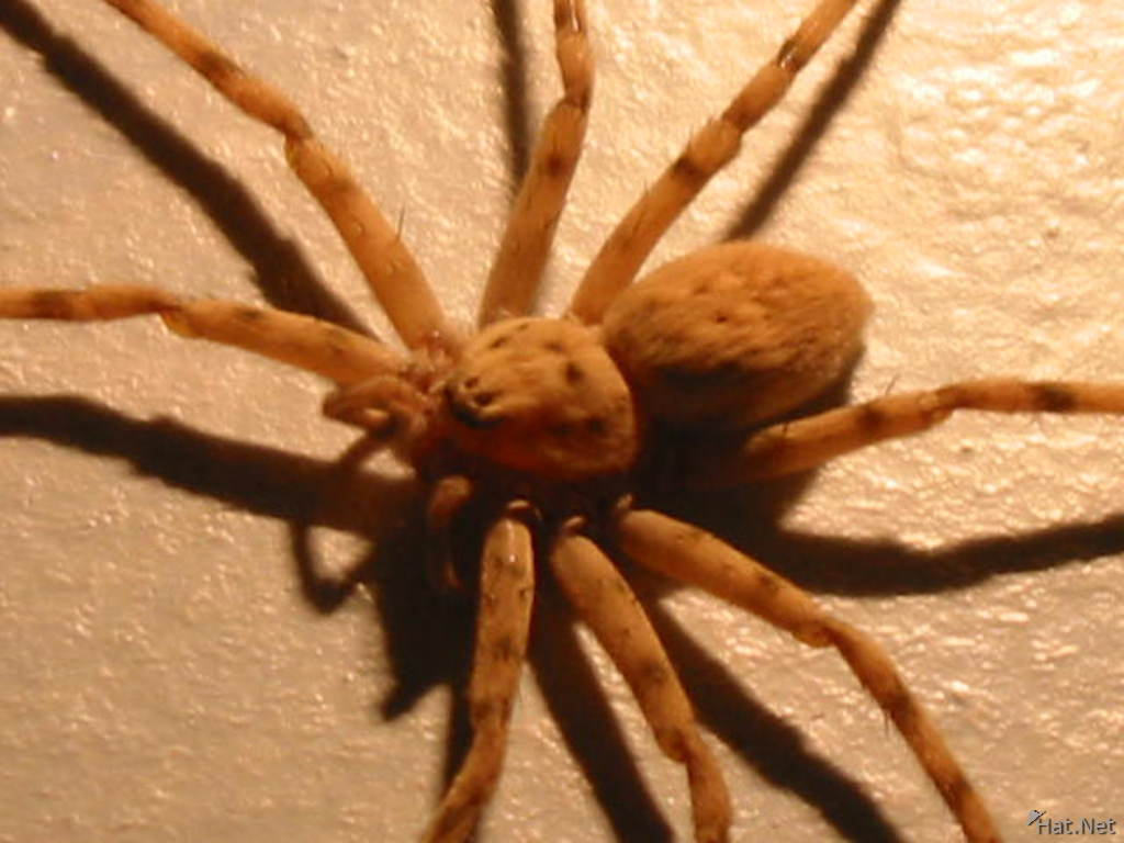 spider in my room