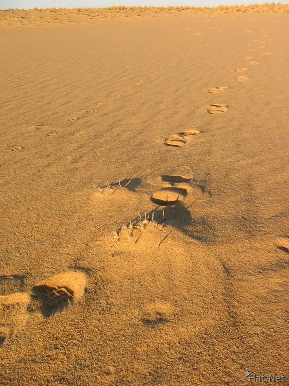 my footsteps in the desert