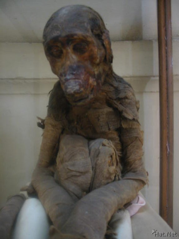 monkey mummy