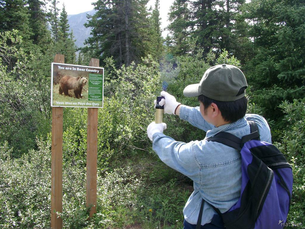 attack by bear sign