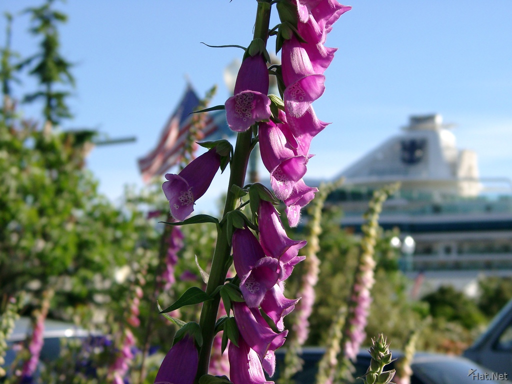 purple flower and cruise ship