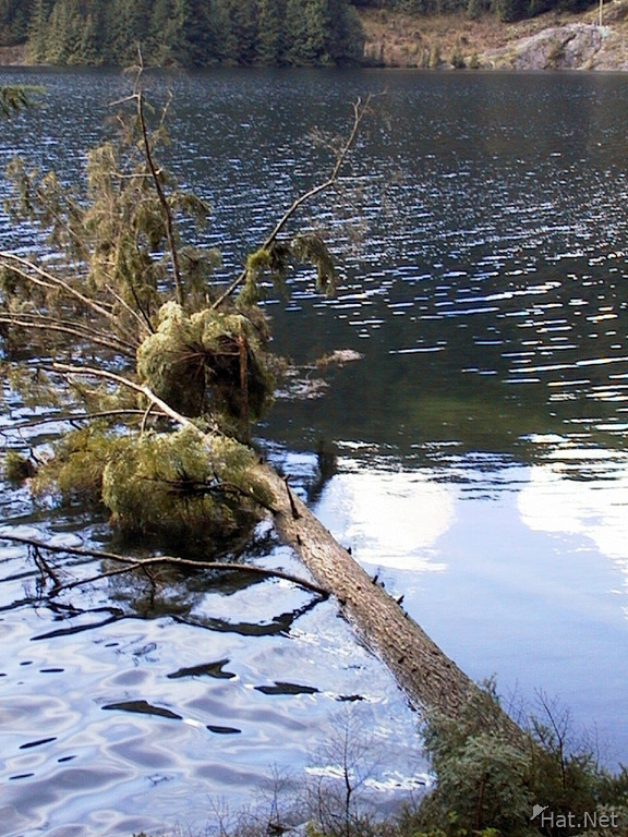 tree died in the lake