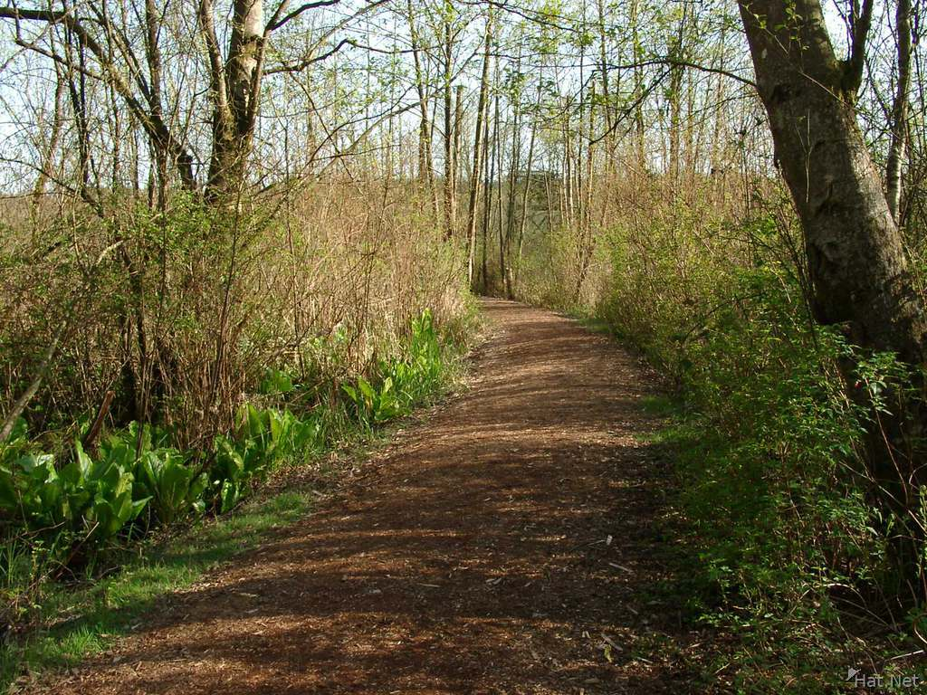 path in burnaby lake park