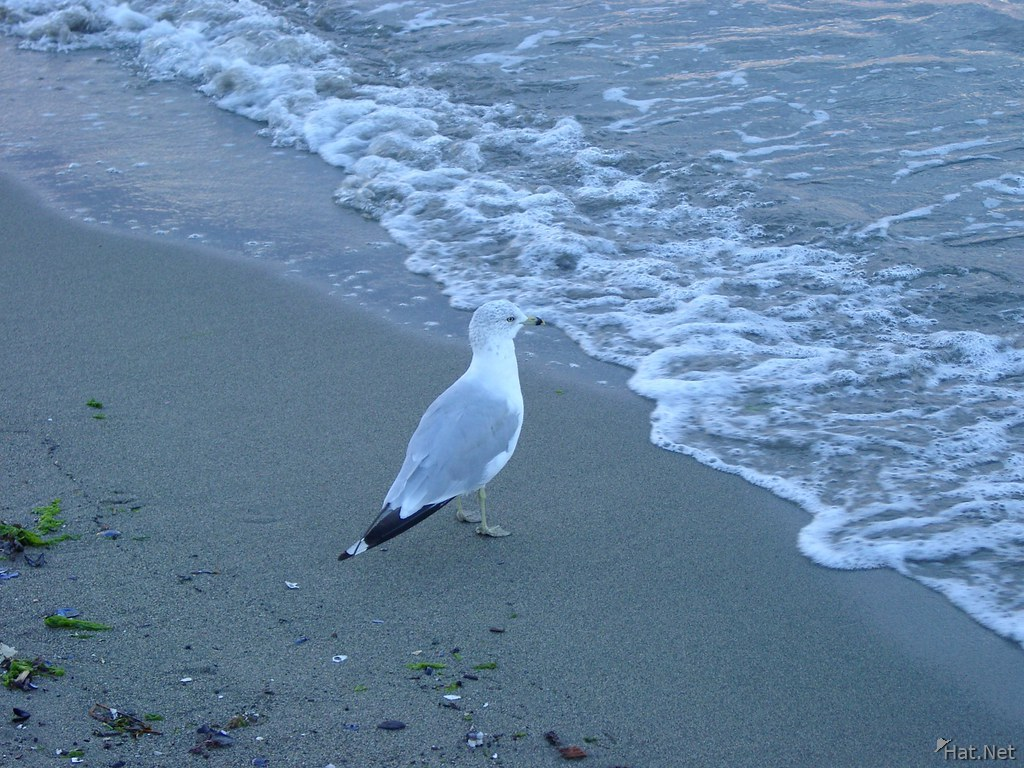 sea gull watching for wish