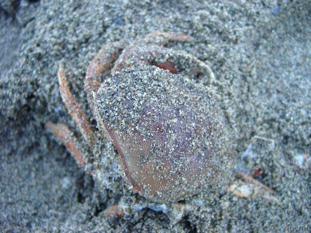 crab burried by sand