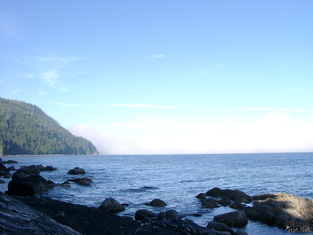 fogs of thrasher cove