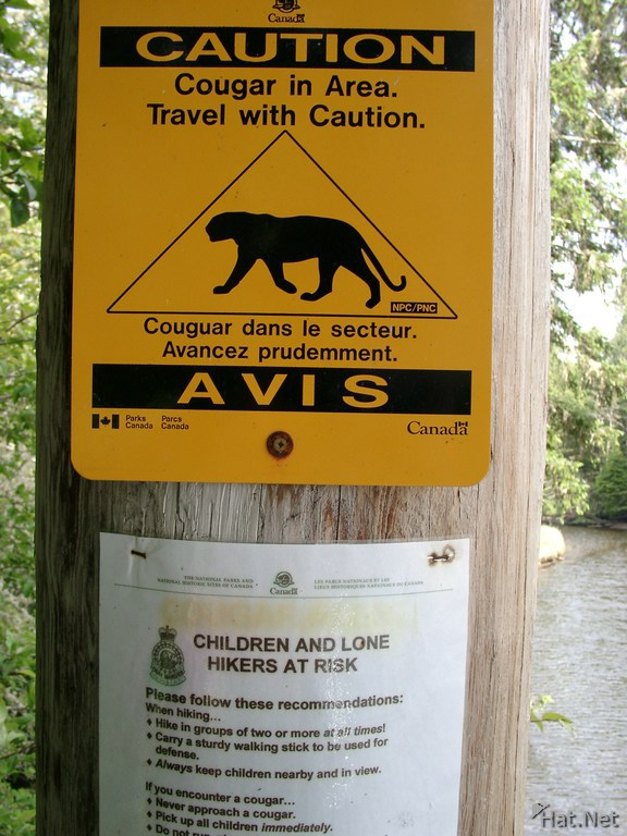 Beware Of Cougar