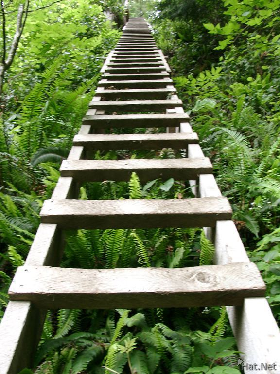 longest ladder at logan creek